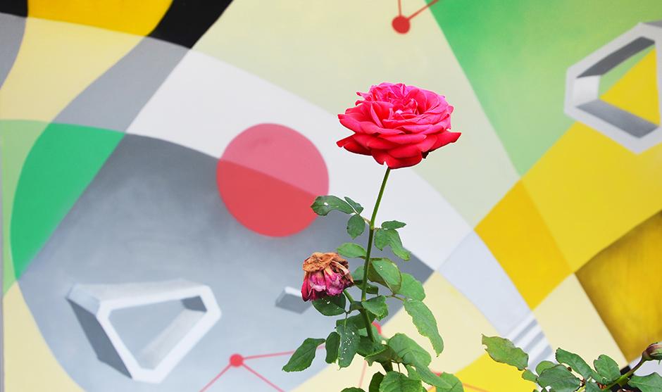 mur, rose, fleur, graffiti, fresque, composition, mélange, végétaux