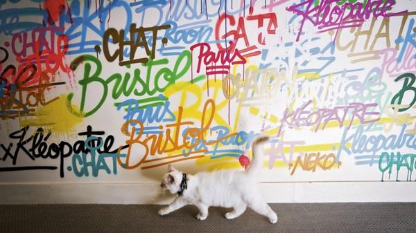 Ecritures, tags et inscriptions de toutes les couleurs sur un mur blanc